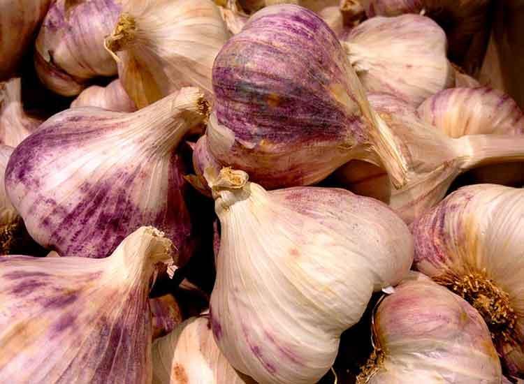 Tete d'ail violet dans votre panier de légumes