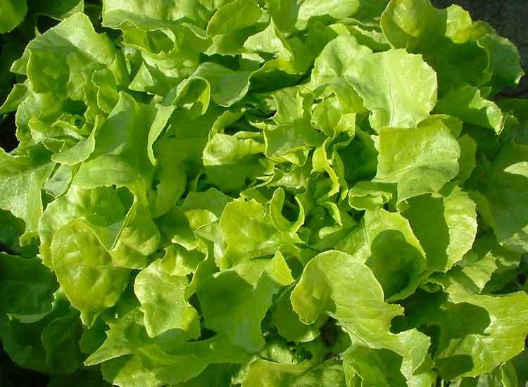commander une salade livrée chez vous