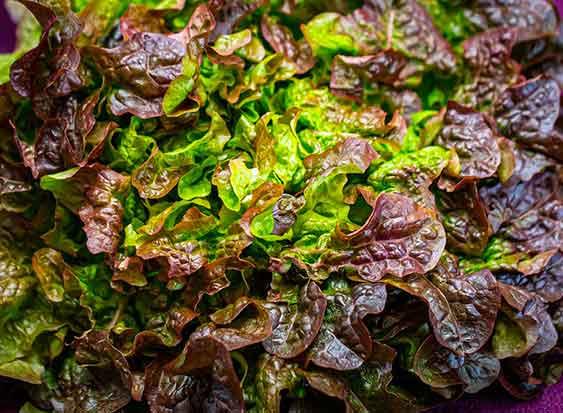 Commander une salade livrée chez vous en 24h