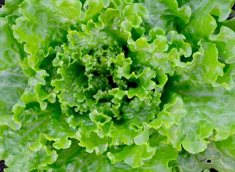 Commander une salade à Agen