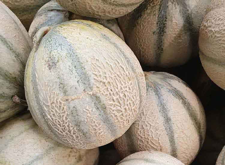 commander des melons à Agen à livrer chez vous