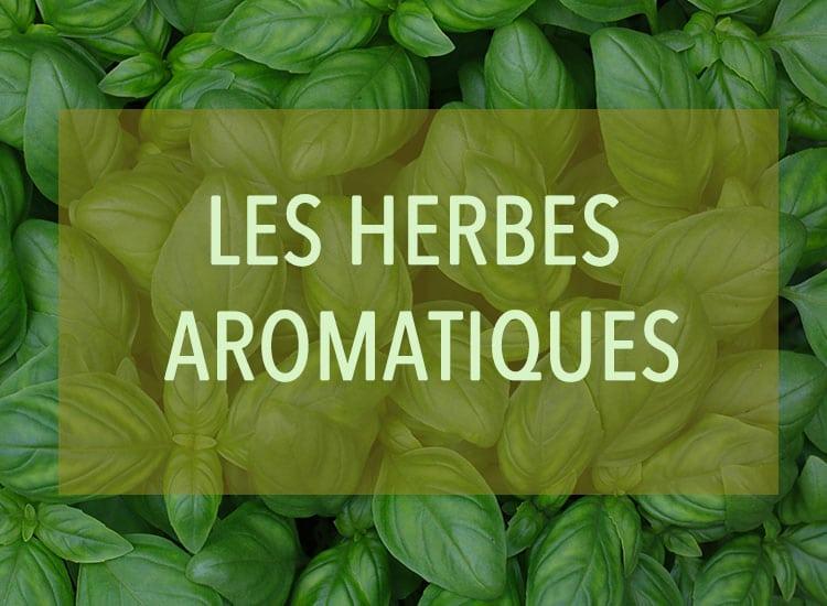 Des herbes aromatiques pour agrémenter votre panier